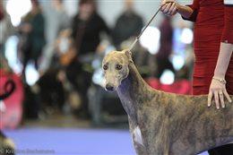 International Dog Show 2xCACIB