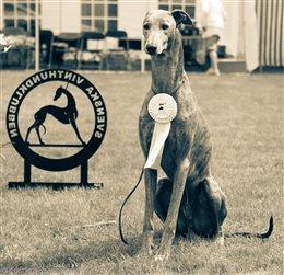 2014 FCI Eurosighthound Show
