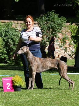 Special Sighthound Show