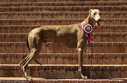 National/International Dog Show