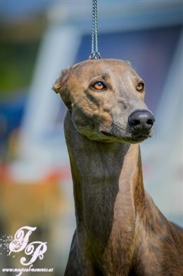 Club (Krenglbach)/International Dog Show