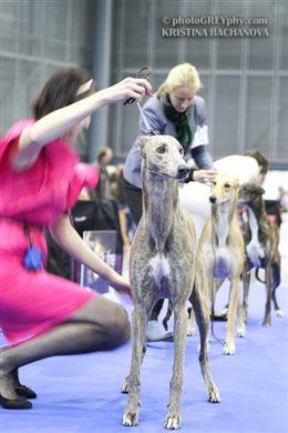 National Dog Show & European Dog Show