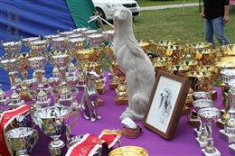 Anniversary Specialty Sighthound Club Show in Jasenie