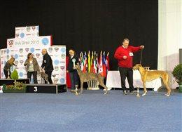 International Hunde Ausstellung in Graz