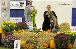 Sighthound Specialty of Slovak Sighthound Club