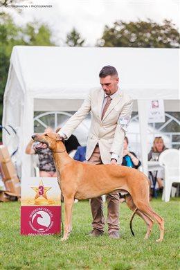 Sighthound Festival Donaueschingen 2017