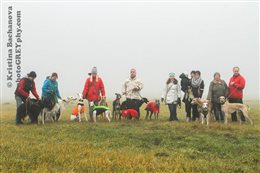 2015 Xmas Sighthound Walking
