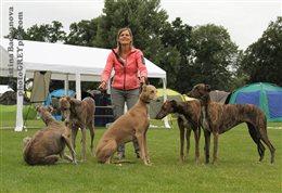 2015 Donaueschingen Sighthound Festival