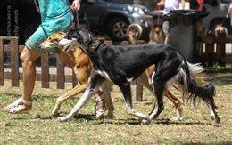 National & International Dog Show